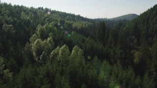 AX48_090 - 5K stock footage aerial video fly low over deciduous and evergreen trees in a dense forest, King County, Washington