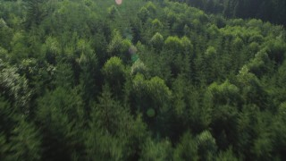 AX48_093 - 5K stock footage aerial video of bird's eye view of evergreen forest, reveal a clear cut area, King County, Washington