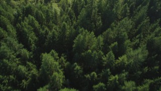 AX49_001 - 5K stock footage aerial video of bird's eye view of evergreen trees and a clearing, King County, Washington