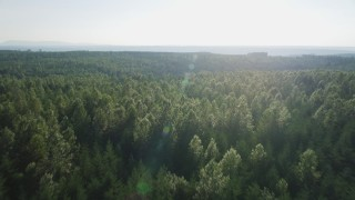 AX49_002 - 5K stock footage aerial video tilt from a bird's eye of evergreens to reveal deciduous trees in King County, Washington