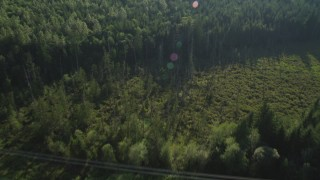 AX49_003 - 5K stock footage aerial video of bird's eye view of a clearing and power lines, and evergreen trees in King County, Washington
