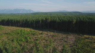 AX49_004 - 5K stock footage aerial video fly over a clear cut area and evergreen forest in King County, Washington