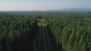 AX49_005 - 5K stock footage aerial video flyby an evergreen forest to reveal a row of power lines, King County, Washington