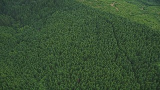 AX56_029 - 5K stock footage aerial video of bird's eye of dirt roads through evergreen forest and logging areas in Washington County, Oregon