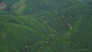 AX56_031 - 5K stock footage aerial video tilt to bird's eye of evergreen forest in Washington County, Oregon