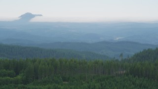 AX56_034 - 5K stock footage aerial video fly over a line of evergreens to approach distant forest in Clatsop County, Oregon