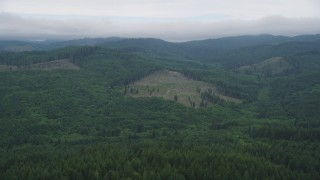 AX56_040 - 5K stock footage aerial video fly over evergreens to approach a large logging area in Clatsop County, Oregon