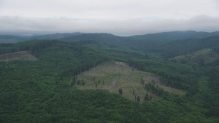AX56_041 - 5K stock footage aerial video approach logging area in an evergreen forest in Clatsop County, Oregon
