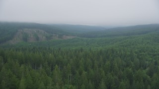 AX56_045 - 5K stock footage aerial video fly over evergreen forest to approach a hillside clear cut area, Clatsop County, Oregon