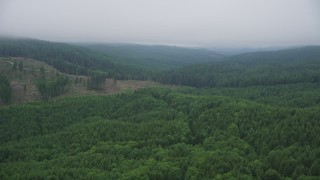 AX56_046 - 5K stock footage aerial video fly over newer forest growth to approach a hillside logging area in Clatsop County, Oregon