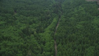 AX56_050 - 5K stock footage aerial video flying over State Route 202 through an evergreen forest and tilt to clear cut areas, Clatsop County, Oregon