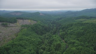 AX56_053 - 5K stock footage aerial video fly over State Route 202 and evergreens near clear cut areas, Clatsop County, Oregon