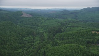 AX56_055 - 5K stock footage aerial video fly over evergreens toward a clear cut area, Clatsop County, Oregon