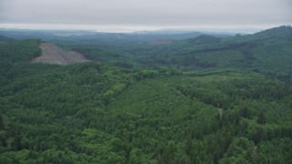 AX56_056 - 5K stock footage aerial video approach logging area while flying over evergreen trees in Clatsop County, Oregon