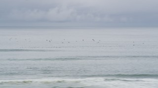 AX56_135 - 5K stock footage aerial video of seagulls flying over the Pacific Ocean, Long Beach, Washington