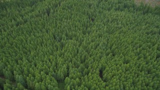 AX56_160 - 5K stock footage aerial video tilt to a bird's eye view of evergreen forest in Pacific County, Washington