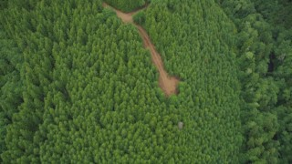 AX56_161 - 5K stock footage aerial video bird's eye view of evergreen trees and dirt roads in Pacific County, Washington