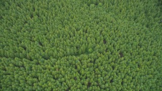 AX56_162 - 5K stock footage aerial video of a bird's eye view of an evergreen forest in Pacific County, Washington