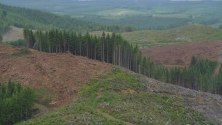 AX56_165 - 5K stock footage aerial video of evergreen trees on the edge of a logging area in Pacific County, Washington
