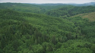 AX56_177 - 5K stock footage aerial video fly over evergreen forest in Pacific County, Washington