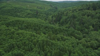 AX56_178 - 5K stock footage aerial video fly over a forest of evergreen trees in Pacific County, Washington