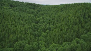 AX56_180 - 5K stock footage aerial video of a forest of evergreen trees in Pacific County, Washington