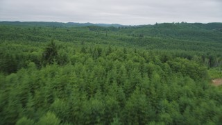AX56_181 - 5K stock footage aerial video fly between towering trees and over a forest of evergreens in Pacific County, Washington