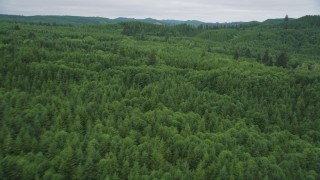 AX56_182 - 5K stock footage aerial video fly over and pan across a forest of evergreen trees in Pacific County, Washington