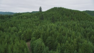 AX56_183 - 5K stock footage aerial video fly over evergreen forest and hills in Pacific County, Washington