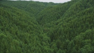 AX56_184 - 5K stock footage aerial video fly between hills covered in evergreen forest in Pacific County, Washington