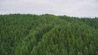 AX56_185 - 5K stock footage aerial video of flying over evergreen forest covering a hill in Pacific County, Washington