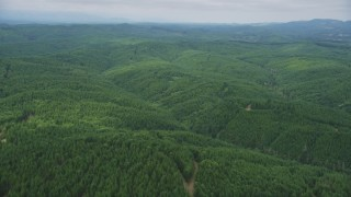 AX57_019 - 5K stock footage aerial video fly over an evergreen forest in Grays Harbor County, Washington