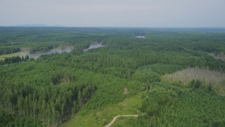 AX58_005 - 5K stock footage aerial video fly over evergreen forest by Cranberry Lake, Shelton, Washington