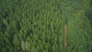 AX58_007 - 5K stock footage aerial video of bird's eye view of a dirt road through an evergreen forest in Shelton, Washington