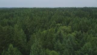 AX58_056 - 5K stock footage aerial video fly over evergreen trees on Vashon Island, Washington