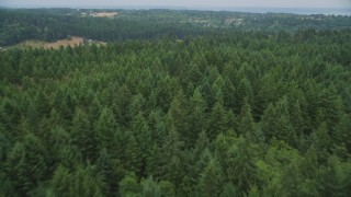 AX58_058 - 5K stock footage aerial video of flying over near the edge of an evergreen forest on Vashon Island, Washington