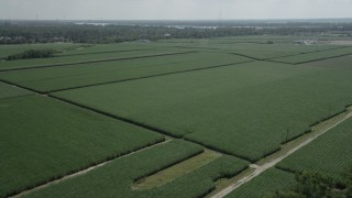 AX60_012 - 5K stock footage aerial video of sugar cane fields in La Place, Louisiana