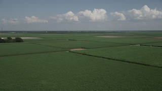 AX60_048 - 5K stock footage aerial video of flying over sugar cane fields, Vacherie, Louisiana