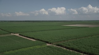AX60_049 - 5K stock footage aerial video fly over fields of sugar cane in Vacherie, Louisiana