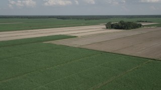 AX60_050 - 5K stock footage aerial video fly over sugar cane fields to approach harvested areas in Vacherie, Louisiana