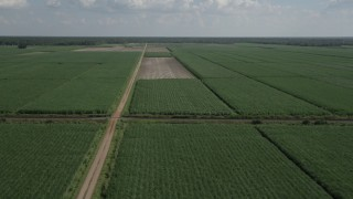 AX60_051 - 5K stock footage aerial video of flying over harvested areas and sugar cane fields, Vacherie, Louisiana