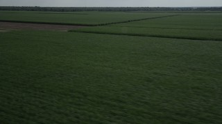 AX60_052 - 5K stock footage aerial video flyby sugar cane fields and harvested fields in Vacherie, Louisiana