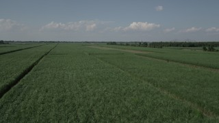 AX60_054 - 5K stock footage aerial video fly low over sugar cane fields, Vacherie, Louisiana