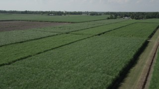 AX60_059 - 5K stock footage aerial video fly low over sugar cane and pan across the fields in Vacherie, Louisiana