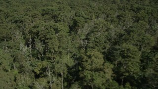 AX60_078 - 5K stock footage aerial video flyby trees and swamp in John the Baptist Parish, Louisiana