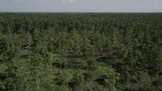 AX60_080 - 5K stock footage aerial video fly over trees and swamps in St. John the Baptist Parish, Louisiana