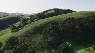 AX70_122 - 4K stock footage aerial video Flying over tall trees on green hilltops in Hollister, California