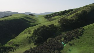 AX70_123 - 4K stock footage aerial video Flying over tall trees on green hills in Hollister, California