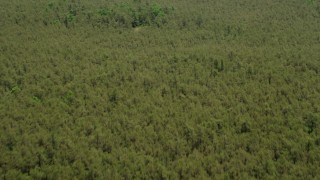 AX71_122 - 5K stock footage aerial video flying over trees in the Pine Barrens, New Jersey