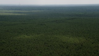 AX71_123 - 5K stock footage aerial video flying over evergreens in Pine Barrens, New Jersey